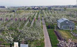果樹試験場